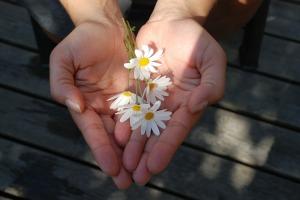 flower-22656_1280[1]
